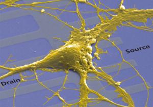 neurons_AI
